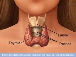Thyroids – who needs them!?