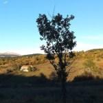 Sendero de Jasule en Ezcaroz