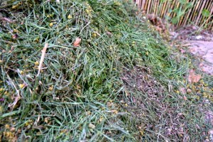 how to mulch using grass clippings or cut grass