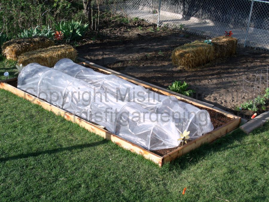 Polytunnels on the plot