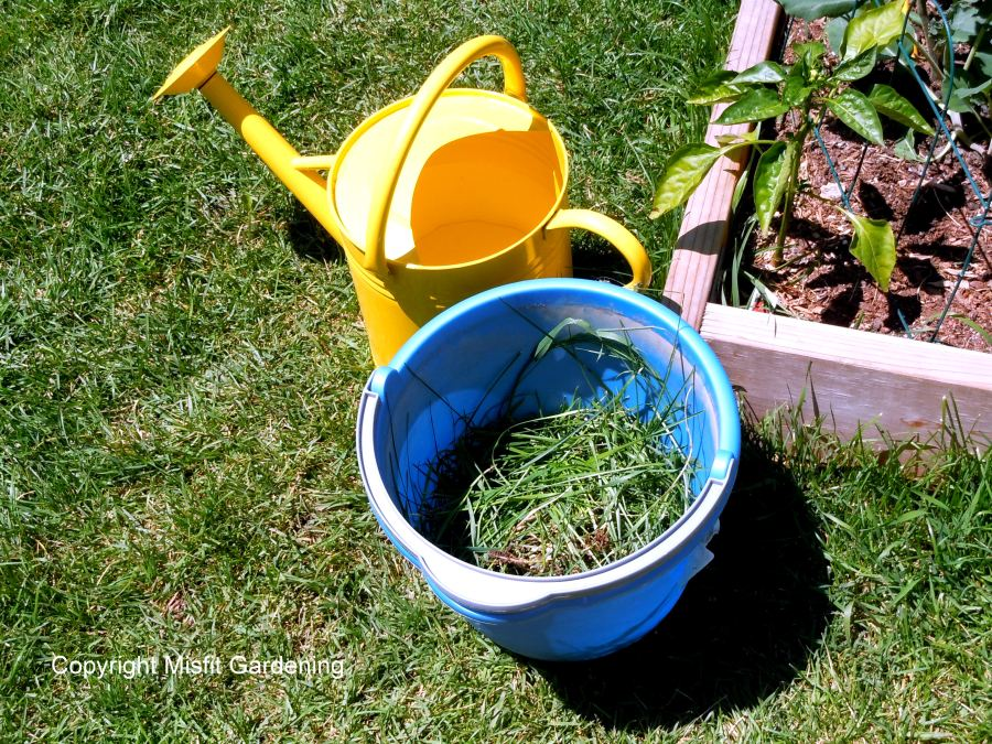 make your own liquid fertilizer