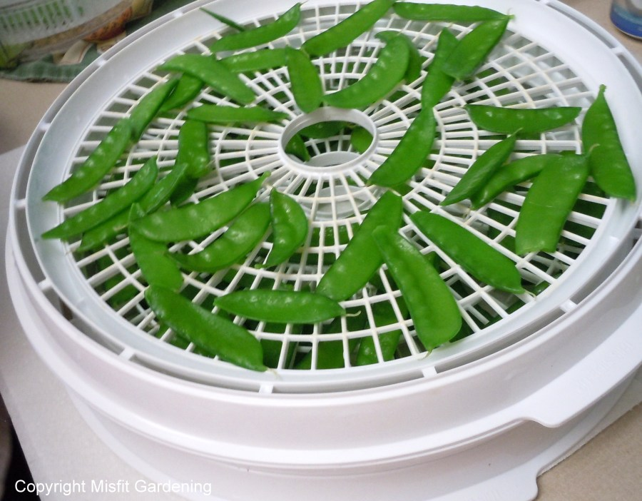 How to dehydrate peas and make pea chips