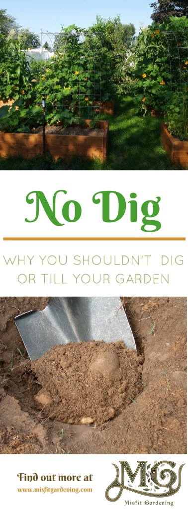 No dig gardening; why you shouldn't dig or till your garden. Click to find out more or pin it and save for later.