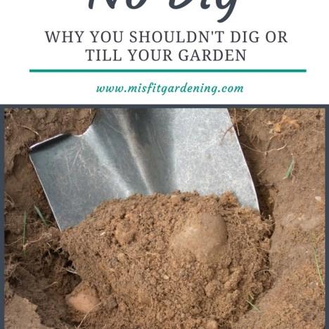 no dig gardening