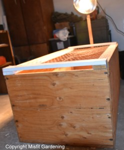 raising chickens brood box