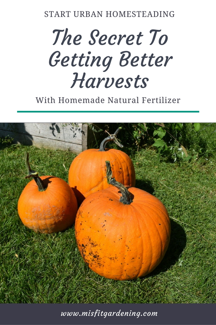 Learn the Secret to Getting Better Harvests with Homemade Natural Liquid Fertilizer