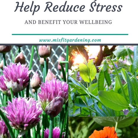 Gardening benefits stress reduction