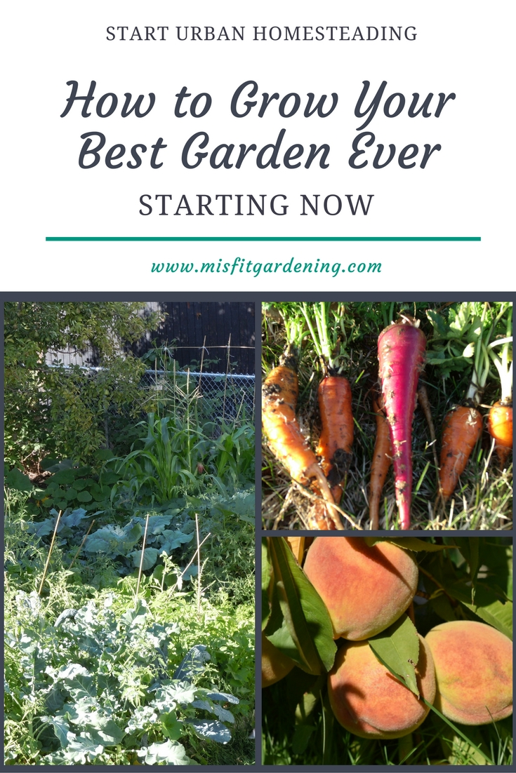 How to grow your best ever garden starting right now. Click to find out more or pin to save for later.