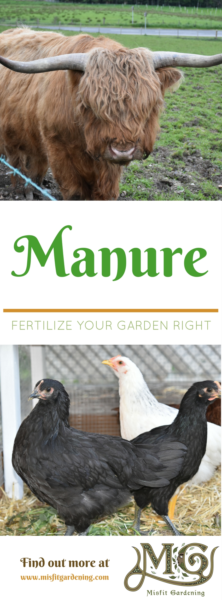 Find out about different manures and how they can help you in your garden. Click to find out more or pin it and save for later.