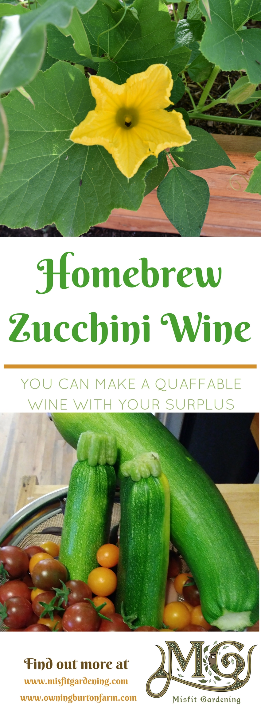 How to make homebrew Zucchini Wine. Click to find out more on what to do with zucchini or pin it for later