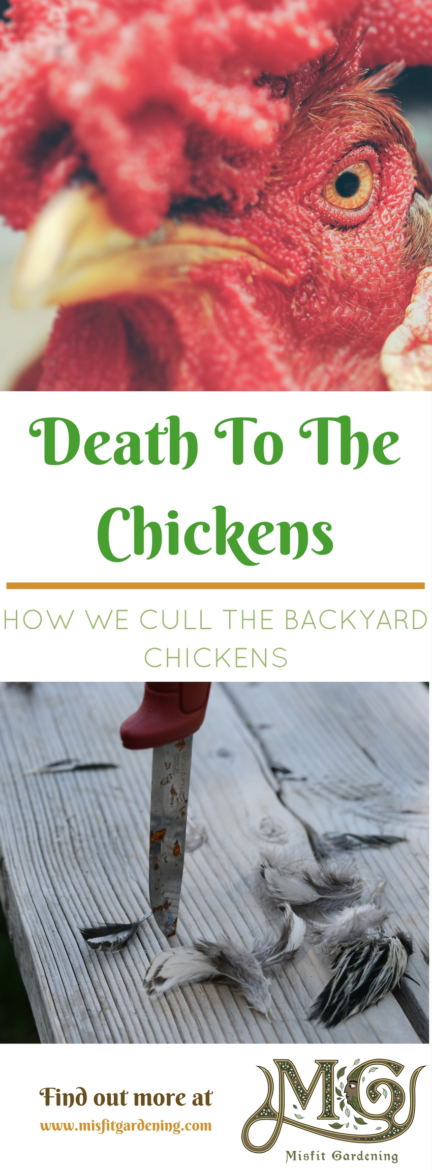 culling chickens