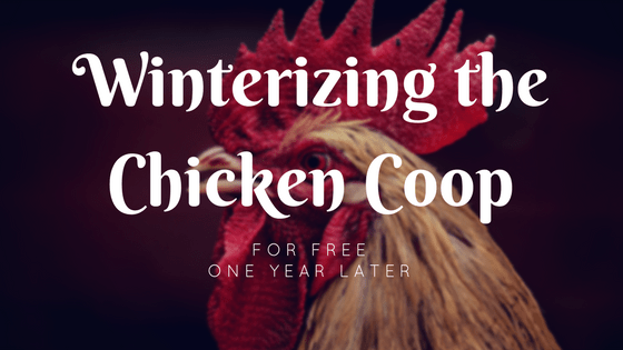 Winterizing the Chicken Coop A Year Later
