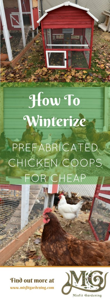 How to winterize prefabricated chicken coops for cheap. Click to find out how to insulate your store bought chicken coop for under $10 or pin it and save it for later.