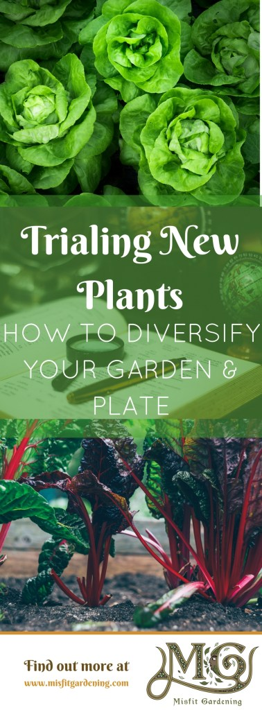 How to trial new plants in the garden. Click to find out why you should trial new plants or pin it and save for later