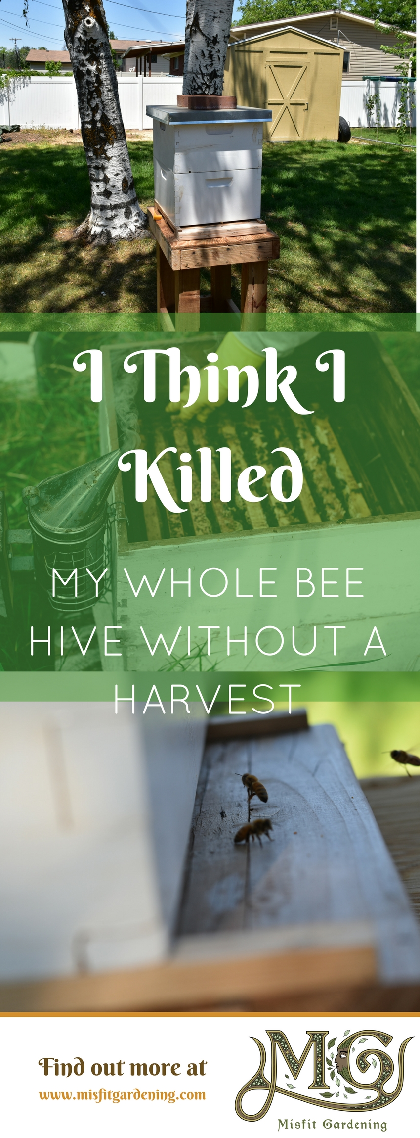 I think I killed my whole beehive before I had a chance to harvest any honey. Click to find out what rookie mistakes I made or pin it for later