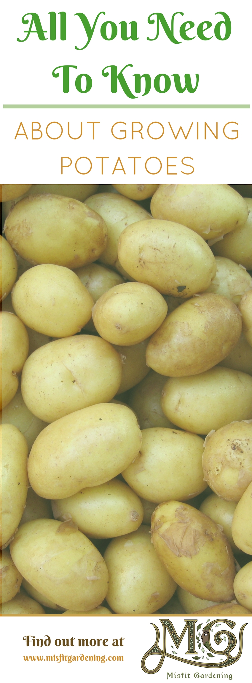 Find out all you need to know about growing potatoes in your own backyard! Click to find out more or pin it and save for later