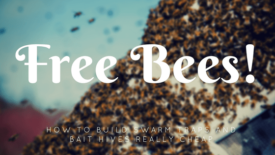 how to build a bee swarm trap