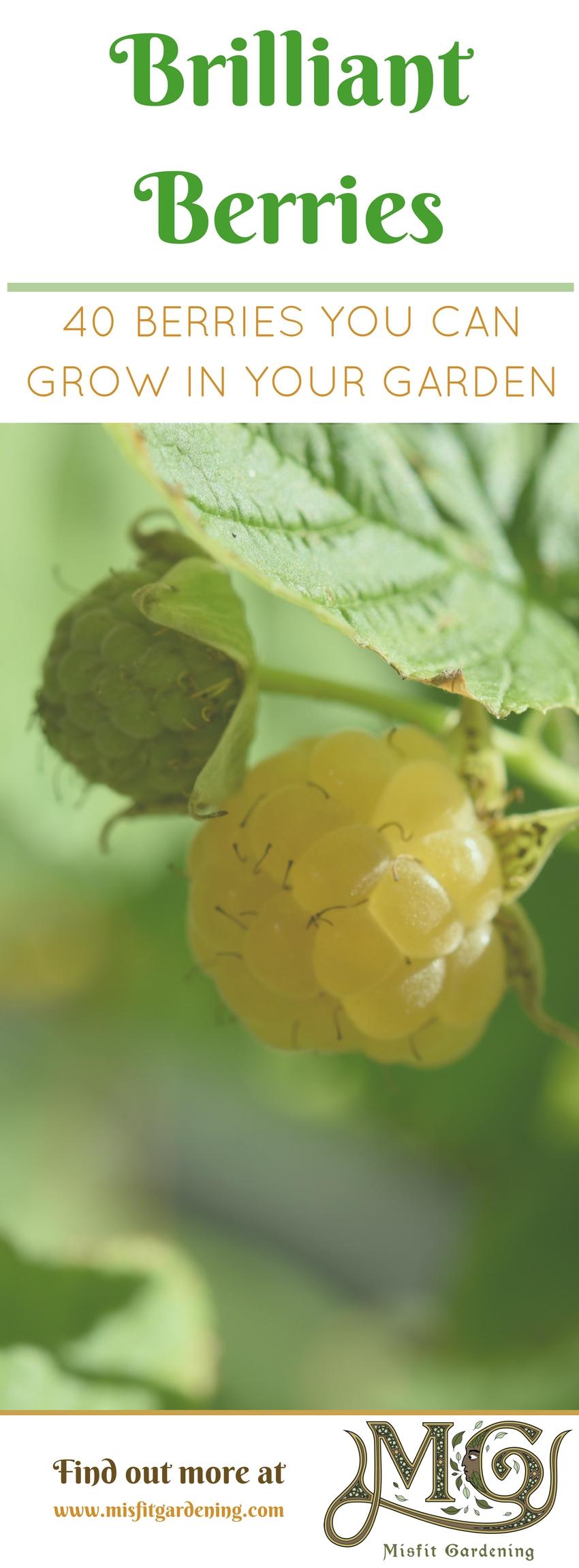 Beeren sind hochproduktive Früchte in kleinen # Gartenbereichen. Klicken Sie hier, um 40 Typen herauszufinden, die Sie vergrößern oder anheften können, um sie für später zu speichern