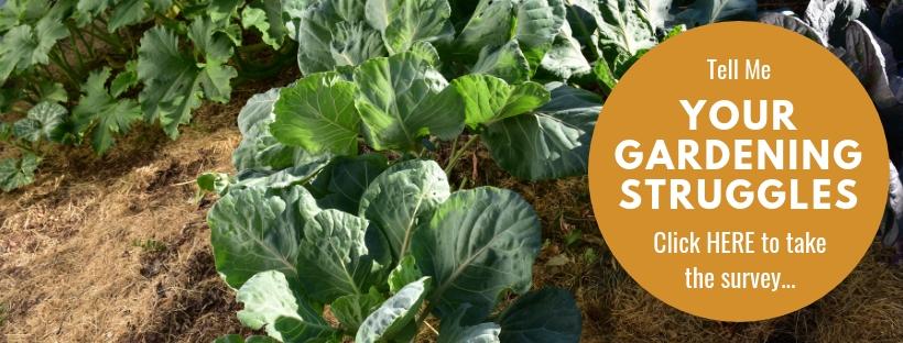 züchte das beste Gemüse