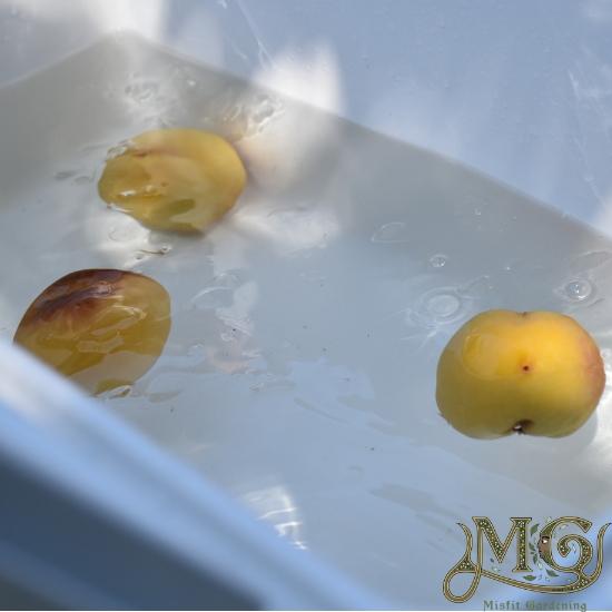 Abkühlung auf die Haut Pfirsiche