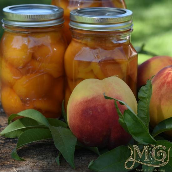 wie man Pfirsiche zu Hause konserviert