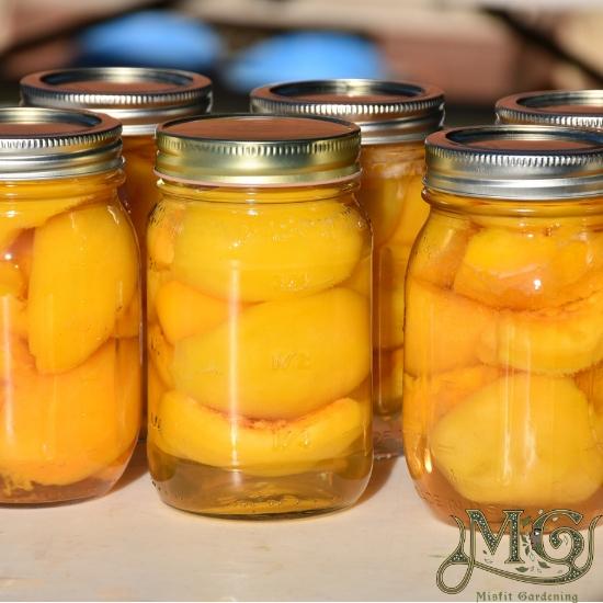 Eingemachte Pfirsiche in Einmachgläsern