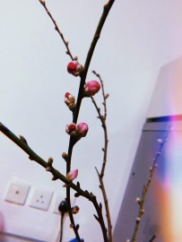 My sister sent me a photo of the blossoms that I left in their apartment.