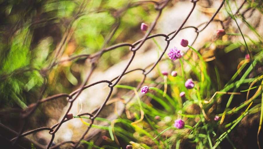 misophonia fence