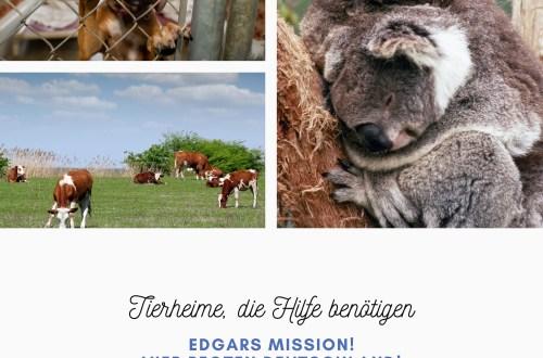 Tierheime, die Hilfe benötigen