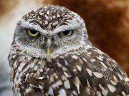 Weird facts about owls