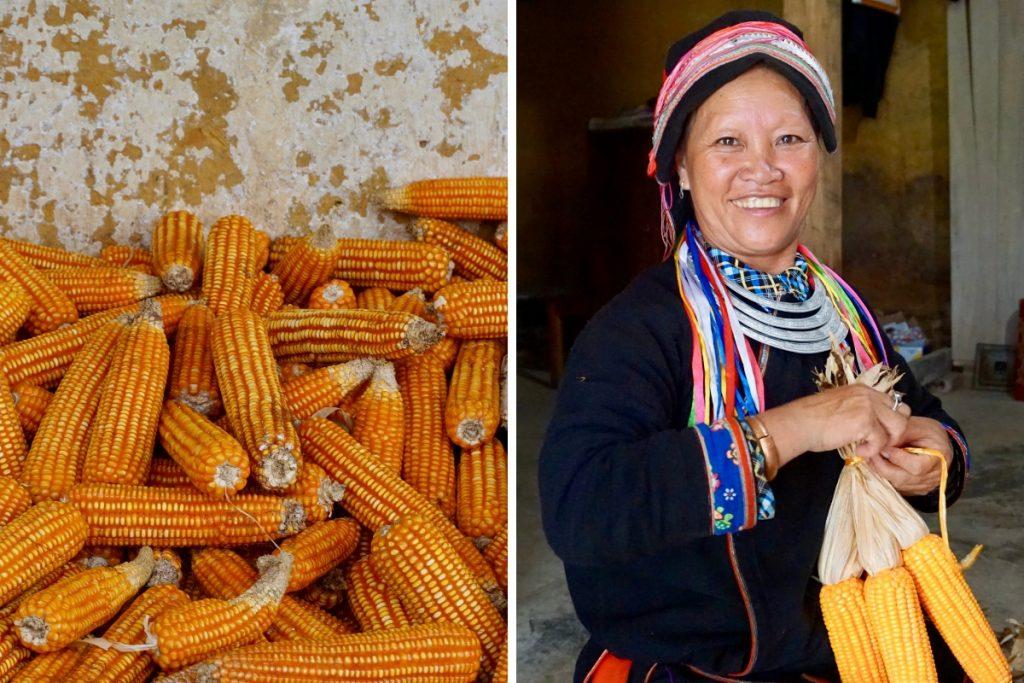 Corn Ha Giang