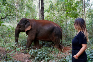 This is Why You Should Visit Cambodia's Elephant Valley Project