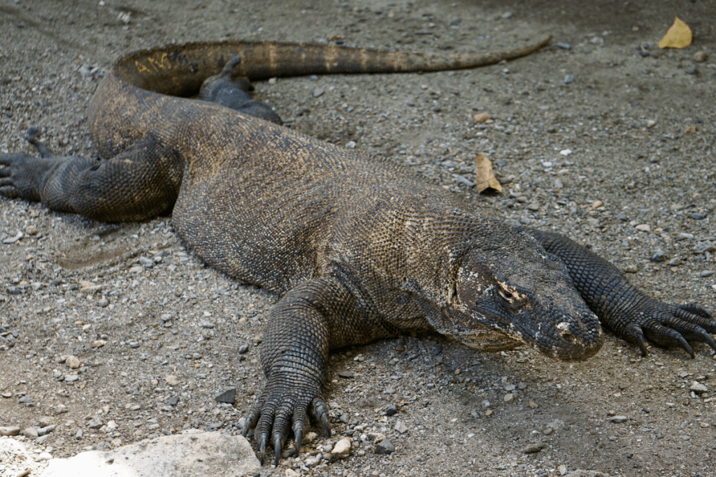 How to Be a Responsible Traveler in Komodo Island