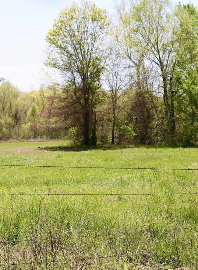 Meadow on Oklahoma ranch