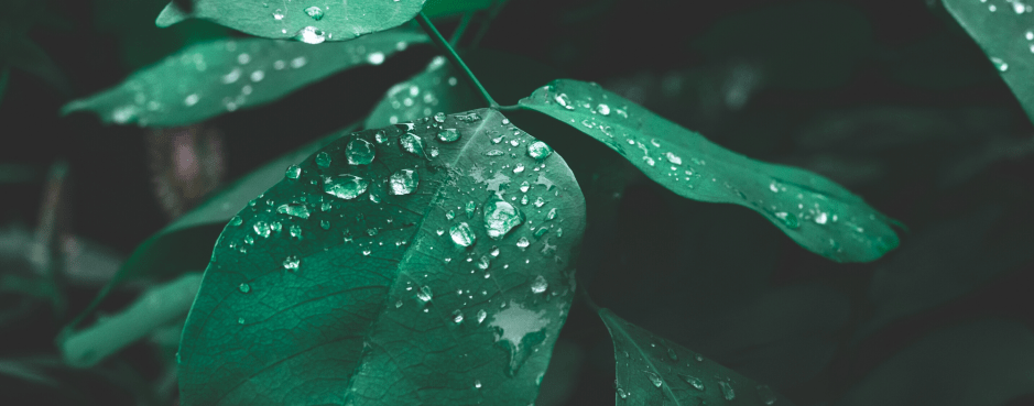 Leaves with droplets