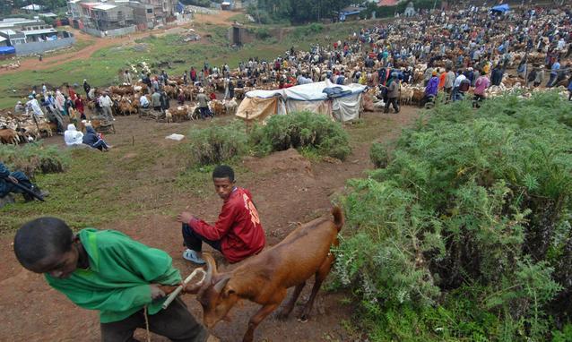 Contadino-etiope-fa-causa-alla-cooperazione-britannica_h_partb