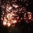 mission_springs_sunset_trees_lookingup