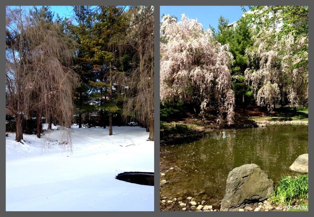 Kariya Park winter AIM pic3