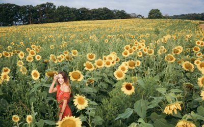 Sunflower Fields in Wisconsin