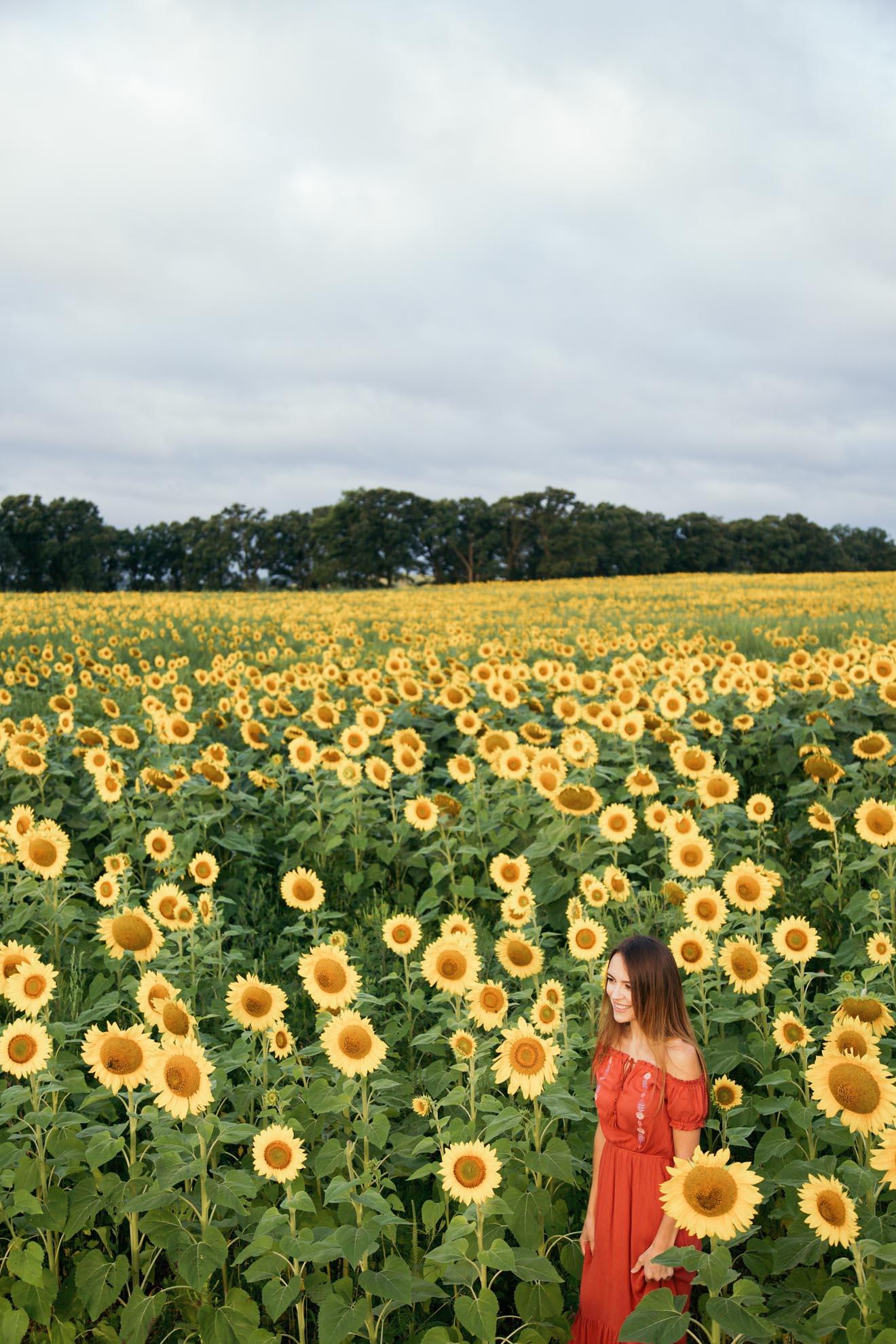 Sunflower Farm in Wisconsin