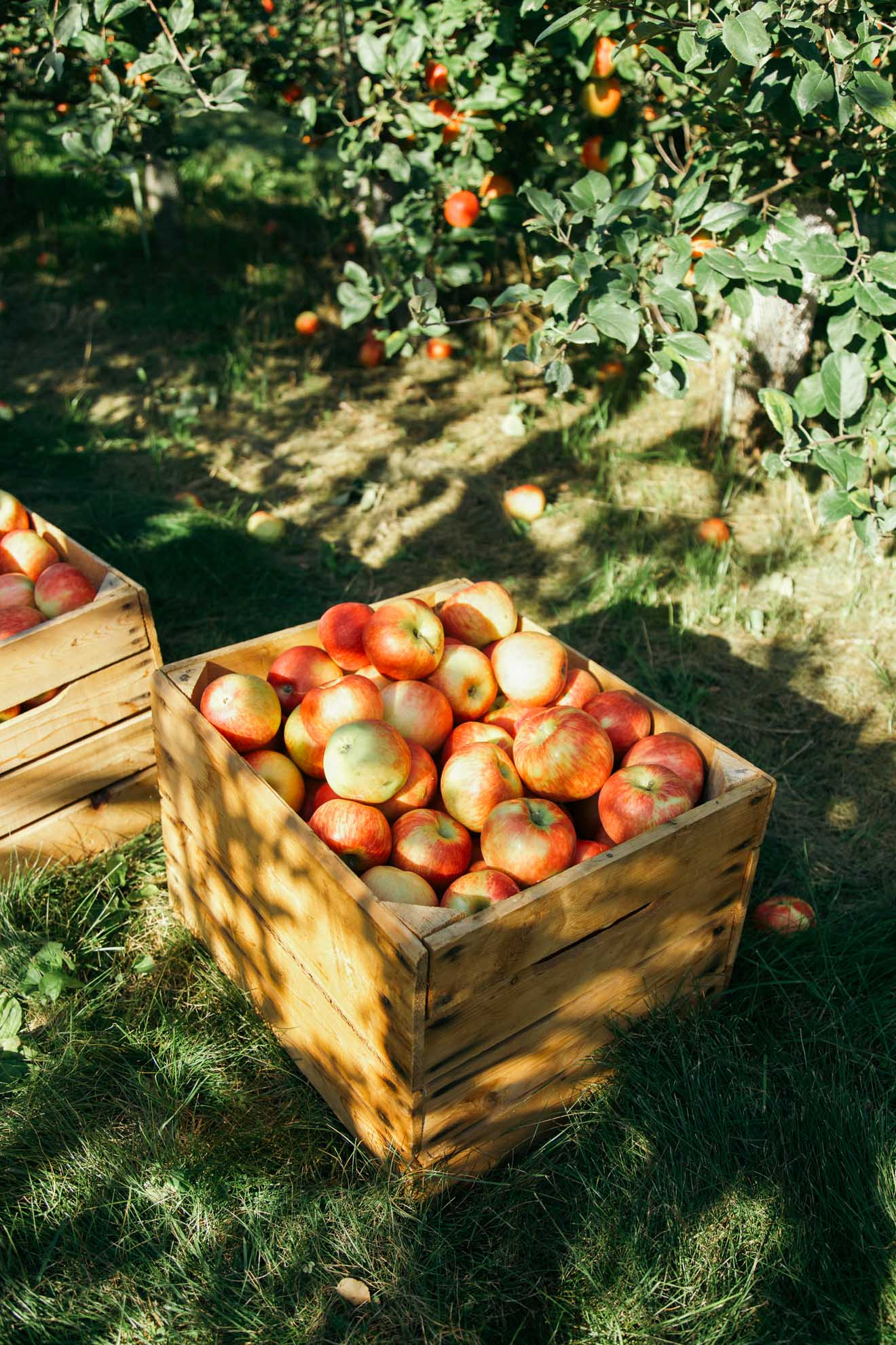 apples in wooden crate