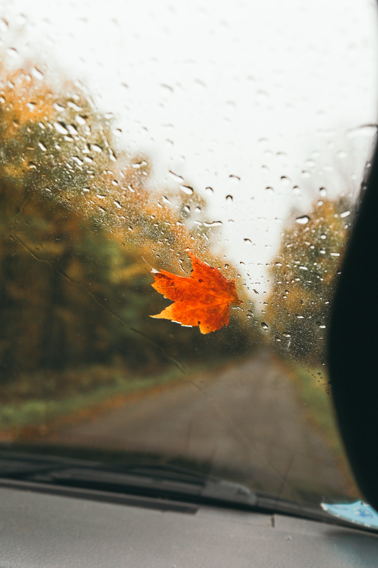 red orange leaf stuck in car window