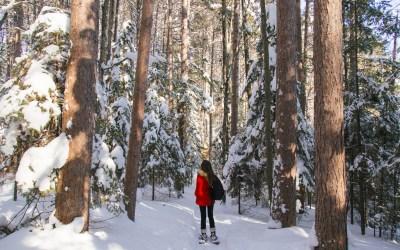 Snowshoeing Fallison Lake Trail