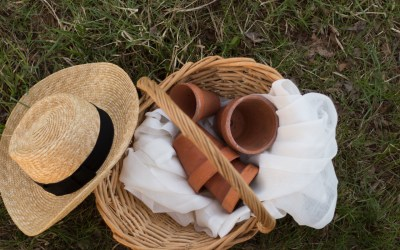 Midwest Gardening Tips