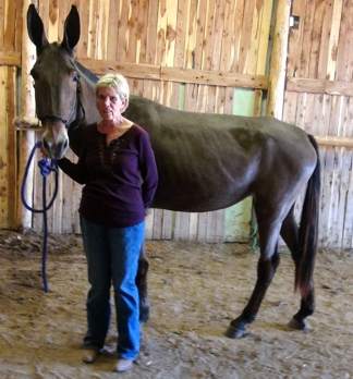 New Owner Diaries Mules Sold By Missouri Mule Company