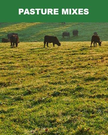 Pasture Mixes