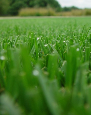 Generic Turf Product