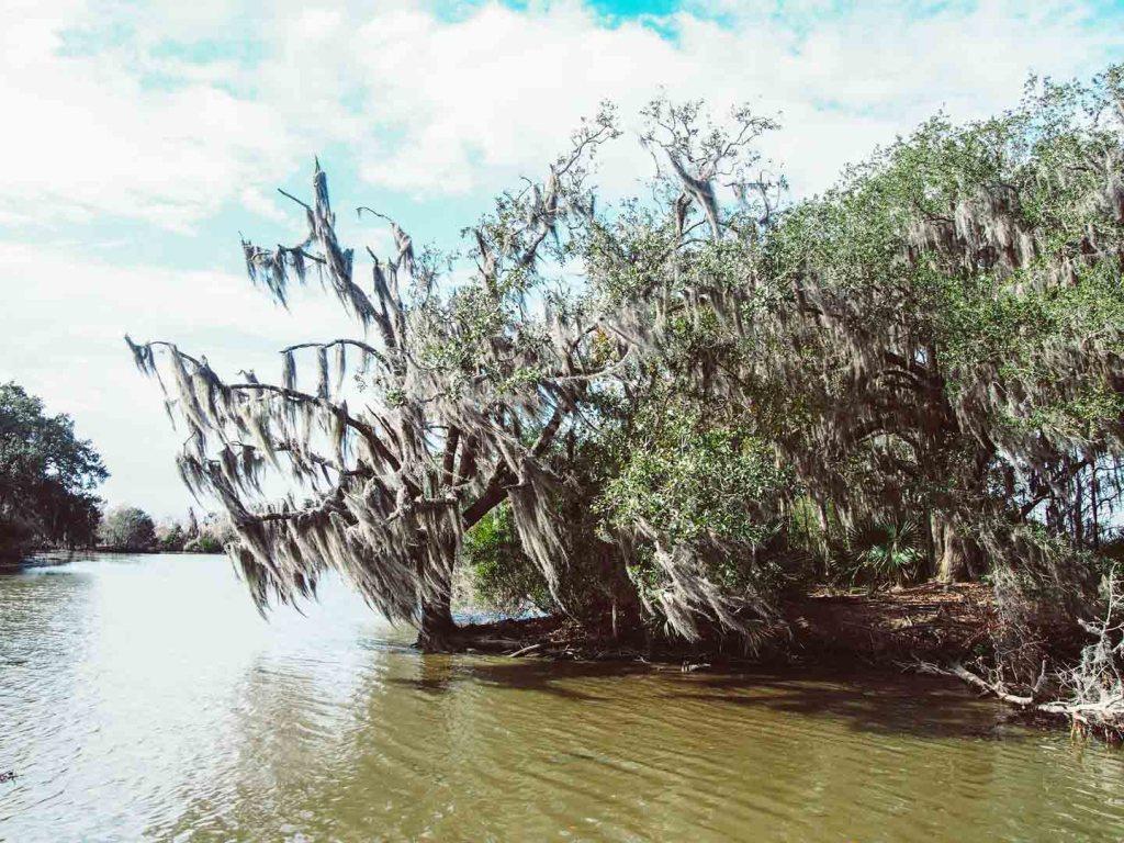Swamp tour, New Orleans
