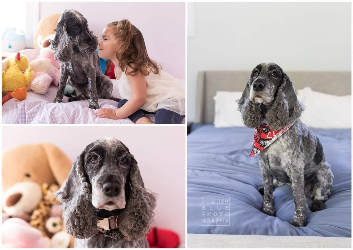 dog. cocker spaniel. girl. child's bedroom. colorful.