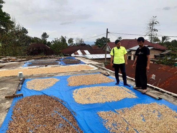 Green Bean Arabica dari Tanah Simalungun, Harga Per Kg Capai Rp250 Ribu